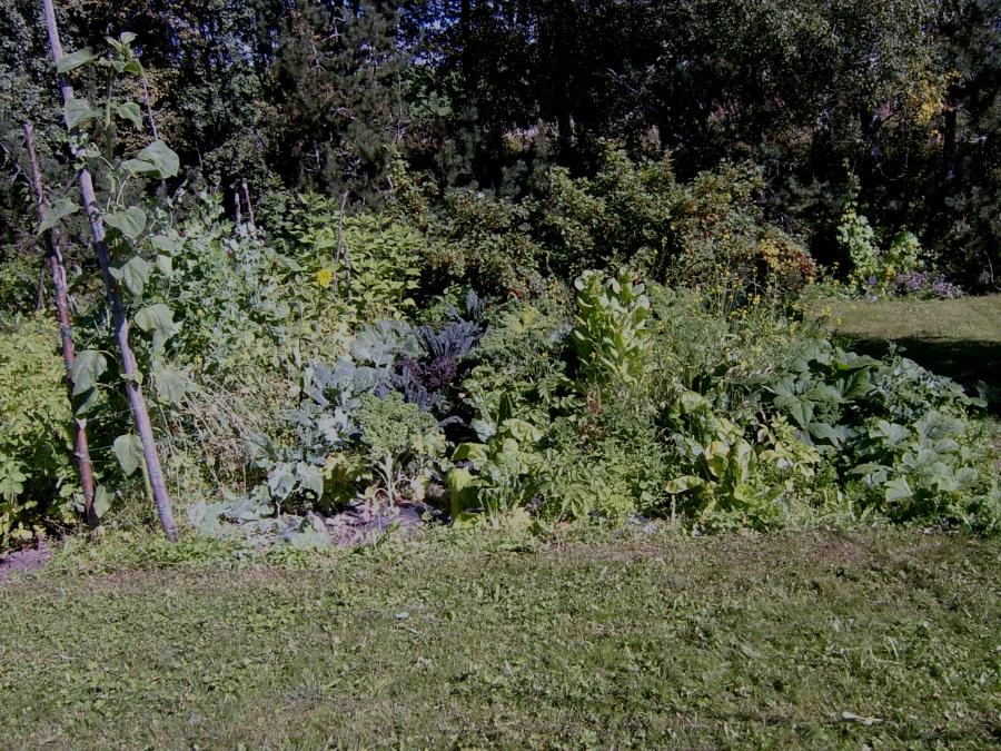 Grønnsakhagen i midten av august
