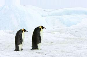 Pingviner heier på Waxman-Markey