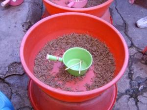 I Kina selges levende skorpioner i litervis som mat.